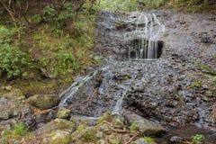 Kalm boslandschap met een kleine waterval Stock Afbeelding