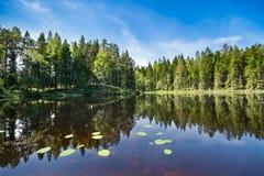 Kalm die meer met waterlilies en bomen in het water wordt weerspiegeld Royalty-vrije Stock Afbeeldingen