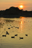 Kalm Duck Pond Royalty-vrije Stock Foto's