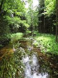 Kalm Forest Stream River Flowing Through Groen Forest Woods stock afbeelding