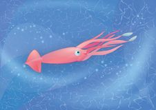 Kalmarschwimmen im Meer Stockbilder