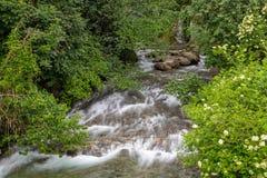 Kalmbachkreek, een schatplichtige van Passer rivier Stock Afbeeldingen