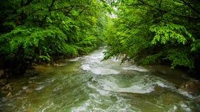 Kalme Bergrivier die neer onder Groen toevloeien stock video