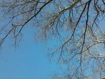 Kalme, duidelijke blauwe hemel Royalty-vrije Stock Afbeelding