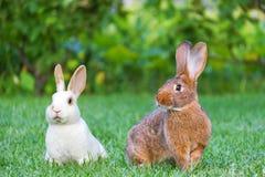 Kalme en zoete kleine bruine en witte konijnen die op groen g zitten royalty-vrije stock afbeeldingen