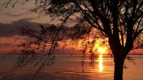Kalme oceaan en een boom bij zonsondergang stock video