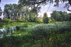 Kalme rivier in de de zomerochtend met groene bomen op achtergrond stock afbeelding