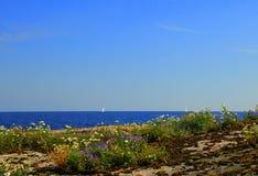 Kalme rotsachtige kust met bloemen stock afbeelding