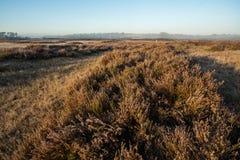 The Kalmhoutse heather park stock photography