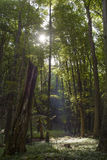 Kalmte in het midden van het bos Stock Foto