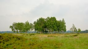 Kalmthout heath, with birch and pine trees on a cloudy hazy day stock images