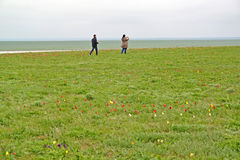 KALMYKIA, RUSSIA. Tourists photograph the blossoming tulips in the spring steppe Royalty Free Stock Images