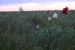 Kalmytskaya steppe spring Royalty Free Stock Image