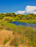 Kalogria forest and lagoon Royalty Free Stock Photos