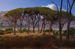 kalogria lasowy strophylia Fotografia Royalty Free