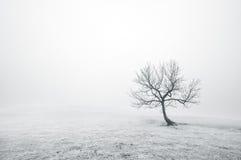 Kalt ensamt träd i svartvitt Arkivbild