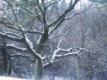 Kalt snö laden träd arkivfoton