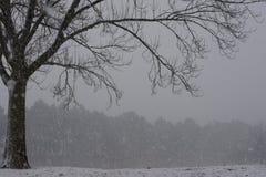 Kalt träd i mitt av en vinterstorm Royaltyfria Foton