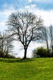 Kalt träd i röjningen Arkivfoto