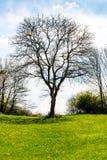 Kalt träd i röjningen Royaltyfri Fotografi