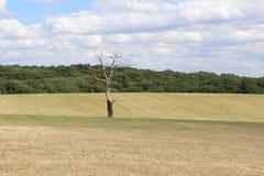 Kalt träd i stort fält Royaltyfria Foton