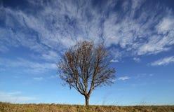 Kalt träd mot bakgrunden för blå himmel arkivbild