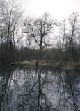Kalt träd och damm i vinter fotografering för bildbyråer