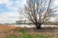 Kalt träd på banken av en liten sjö Arkivfoto