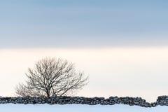 Kalt träd vid en stenvägg Arkivbild
