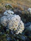 Kalte Blume stockfotos