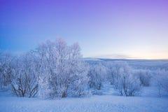Kalte Landschaft von Lappland-Winter lizenzfreie stockfotos
