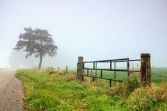 Kalte Morgenlandschaft mit Tau auf dem Gras Stockfotos