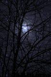 Kalte Nacht und Bäume Lizenzfreie Stockfotografie