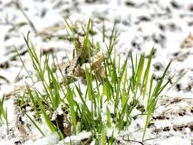 Kalter Frühling in Lettland April 2017 Lizenzfreie Stockfotos