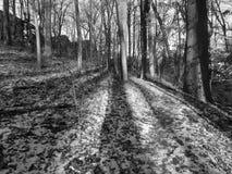 Kalter Januar-Einheimisch-Park Lizenzfreie Stockbilder