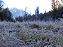 Kalter Morgen Stockbild