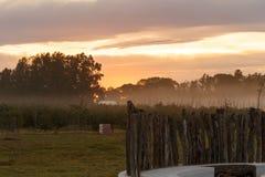 Kalter Nebel, der über dem Tal von Addo Wildlife liegt Stockbilder
