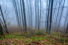 Kalter Nebel im Wald Lizenzfreies Stockfoto