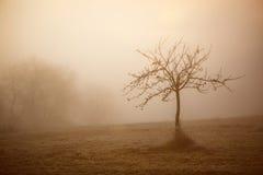 Kalter nebeliger Wintermorgen Stockbild
