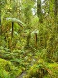 Kalter Regenwald in neuem Zeland stockbild