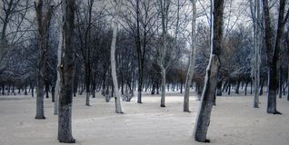 Kalter Tag im Park Lizenzfreies Stockfoto
