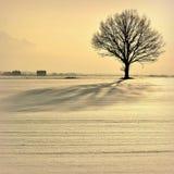 Kalter und bunter Winterabend in Litauen stockfotografie
