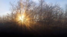 Kalter Wintermorgen Sun durch Bäume und Nebel Stockfoto