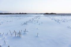 Kalter Wintertag Lizenzfreies Stockfoto