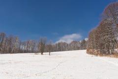 Kalter Wintertagesschöner Reif und -rauhreif auf Bäumen stockfotografie