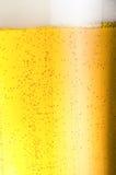 Kaltes Bier Neues Bierkonzept Lizenzfreies Stockbild