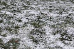 Kaltes deprimierendes Bild des Grases unter Schnee Konzept für traurige Blogs, Artikel über schlechtes Wetter Stockfoto