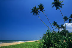 Kalutara海滩斯里南卡 库存图片