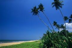 Kalutara beach Sri Lanka. Palm trees on Kalutara beach, Sri Lanka Stock Images