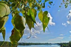 Kalutara Bodhiya, Kalutara, Σρι Λάνκα Στοκ Εικόνες
